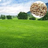 Swiftt Rasensamen Hausgarten Hof Immergrüne Rasenpflanze Spielrasen Spiel Rasen Grassamen Rasensaat Gras Haushaltsgrassamen (30Pcs)