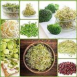 Sprouting Samen - Vitamin-B-reiche Sprossen - 9-teiliges Set + Sprouter mit 3 Sc