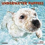2016 Underwater Puppies Mini Wall Calendar by Seth Casteel (2015-08-22)
