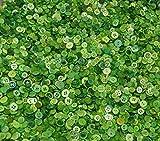 Knöpfe zum Nähen und Basteln, Mischung mit verschiedenen Formen und kleinen Größen, Packung mit 100g, grün