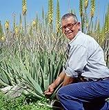 PURES ALOE GEL 99,6 % - ALOVERIA® Aloe Vera Pur, kaltgepresst aus Gran Canaria