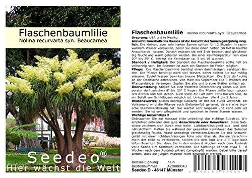 Seedeo® Flaschenbaumlilie - Elefantenfuß -(Nolina recurvata) 10 Samen