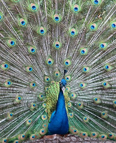 Journal: Peacock displaying feathers (Displaying Peacock Feathers)