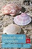 Muscheln und Schnecken: An europäischen Stränden sammeln und bestimmen - Gert Lindner