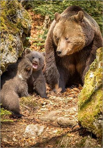 Impression sur bois 30 x 40 cm: Bear family de Sebastian Jakob