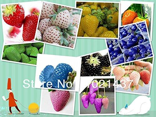 En vente 500pcs multicolores super grandes fraises semences, graines de fleurs, ghd, parfum bonsaï, bricolage, décoration, fournitures de jardin, maison et jardin,