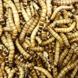 Free delivery 40g Morio Worms (approximately 50)
