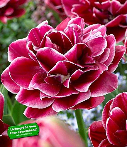 BALDUR Garten H-34279