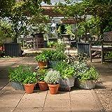 Kräuter-Pflanzen - Mittleres Kräuter-Starter-Set - Enthält 16 Pflanzen zum günstigen Setpreis