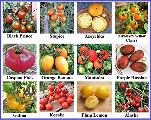 Tomatensamen Sortiment, 12 seltene alte Sorten, samenfest und Kältetolerant, für kurzen und kühleren Sommer gut geeignet