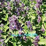 Originalpackung Porree Samen ausdauernde lila Wurzel Lauch schnelles Wachstum Veilchenwurzel Schnittlauch Niere Balkon Gemüsesamen - 120 Stück