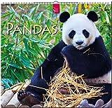 MF-Kalender PANDAS 2019 -
