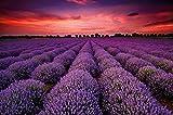 Lavendel Feld Zauber der Provence Wandbild by GREAT ART XXL Poster Wanddekoration 140 cm x 100 cm