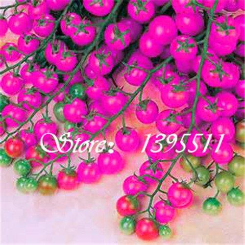 200pcs bunte Kirschtomatensamen Balkon Obst und Gemüse Saatgut Topf Bonsai Topfpflanze Tomatensamen 8