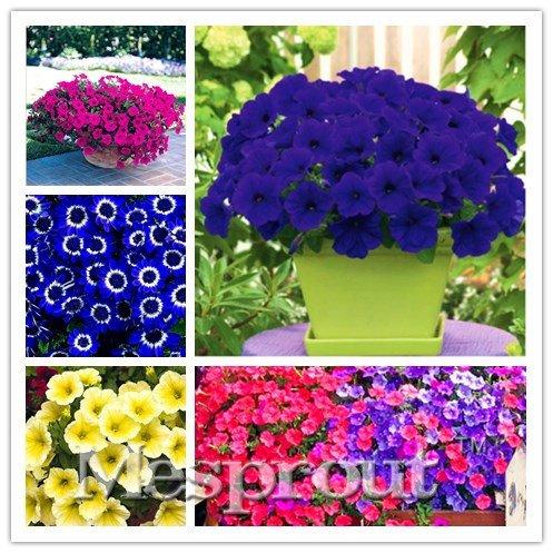 22 Arten Hängende Petunia Samen, der Garten-Petunie Samen, Mischfarbe 100pcs, Sehr Schöner Garten Blumen leuchten Ihrem Garten