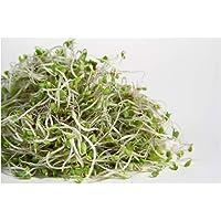 PREMIER SEEDS DIRECT - Organic Sprouting Seeds - Broccoli - 400GM (Brassica rapa VAR, cymosa)