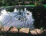 Siena Garden 543288 - Red para cubrir estanques (4 x 5 m, cinta de 20 x 20 mm)