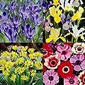Frühlings/ Sommerkollektion - 40 blumenzwiebeln von Meingartenshop auf Du und dein Garten