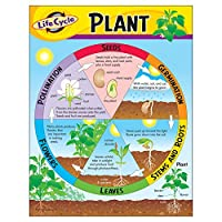 "Trend Enterprises Inc T-38179 Life Cycle of a Plant Learning Chart, 17"" x 22"", Multi"
