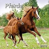 Monatskalender Pferde 2019