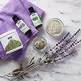 Huiles essentielles, Tea Tree, 1 fl oz (30 ml) - Now Foods