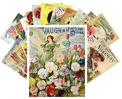 Tarjeta postale 24pcs Flowers Vintage Seed Pockets Gardens Pansies