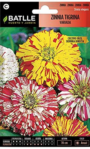Semillas de Flores - Zinnia Tigrina variada - Batlle