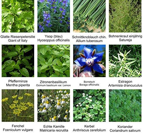 Samen - Saatgutsortiment - Set - Mix - Mischung - Kräutergarten 2 - 12 Sorten - ca. 900 Samen