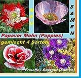 25x Papaver Mohn Poppies Mix Samen Saatgut Garten Pflanze Frisch #165