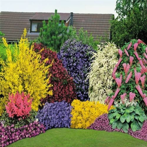 5x-mixed-established-garden-shrubs-quality-potted-plants-colourful-border
