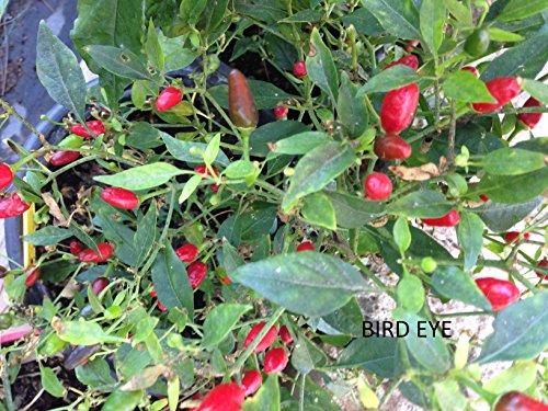 semi-peperoncini-bird-eye-guida-alla-coltivazione