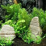 Nano 11 - Pflanzen Set für Nanoaquarium 20-30 l