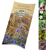 Saatgut Set: 'Erdbeeren', 3 alte aromatische Sorten als Samen in schöner Geschenk-Verpackung