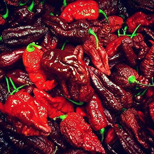 Chili ''Brown Bhutlah'' 10 Samen -Schärfer als Bhut Jolokia- Top Ertrag