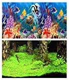 Aquarium Fotorückwand Rückwandfolie Pflanzen Nemo 200x40 cm