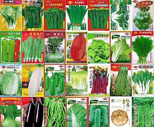 Portal Cool Rom Salat 400 Samen Römischer Salat: Gemüsesamen China Frühling und Herbst Garten Topf Yard Jahreszeiten Original-Seed Säen Gemüsesamen Balkon Terrasse Garten