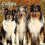 Collies 2019 - 18-Monatskalender mit freier DogDays-App (Wall-Kalender)