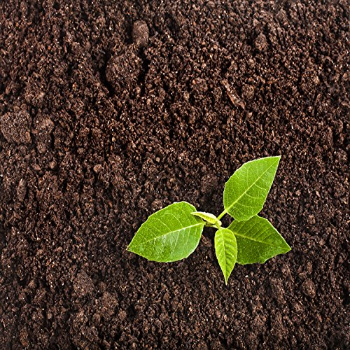 Kraft Seeds Kochia Flower Seeds with 100g Agropeat (Multicolour)