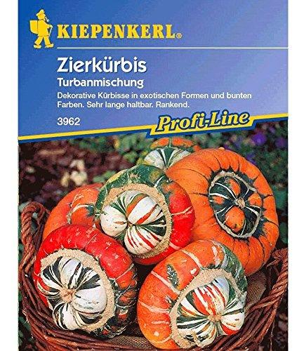 Zierkürbis 'Turban-Mischung', 1 Tüte Samen