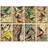 Paper Moon- Quality Scrapbooking Paper x 8 sheets 7cm x 10.8cm - Birds