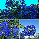 Go Garden 100Pcs / Tasche Exotische Bougainvillea Samen Blaue Blume Perennial Baum Outdoor-Dekor