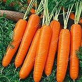 Las semillas de zanahoria 300pcs 100% real Semilla delicioso dulce y semillas de zanahoria vegetales saludables Inicio Jardín de Plantas de envío gratuito amarillas