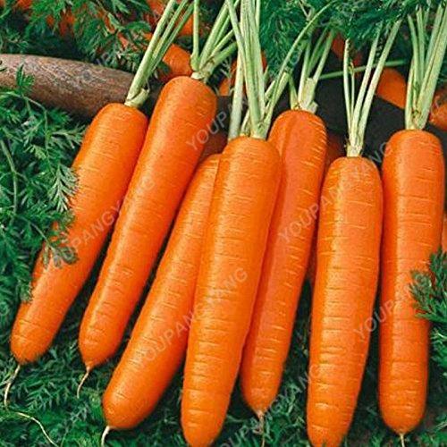 100pcs / sac carotte Semences Heirloom bio Graines Légumes Fruits très Graines ginseng long carotte Plante en pot pour jardin jaune