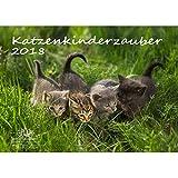 Premium Kalender 2018 · DIN A4 · Katzenkinderzauber · Katzenkinder · Katzenbabys · Katzen · Stubentiger · Tier · Edition Seelenzauber
