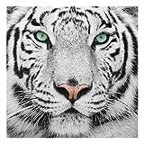PPS. Imaging Druck auf Glas Art Wand–Weiß Tiger–quadratisch 1: 1Druck auf Glas, Glas Druck, Glas Bild, Wandbild, Glas Bild, Wandbild, Glas Wandbild, Glas-, Wandbild, Dimension HxB: 50cm x 50cm