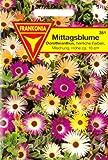 Mittagsblume, Dorotheanthus bellidiformis, ca. 200 Samen