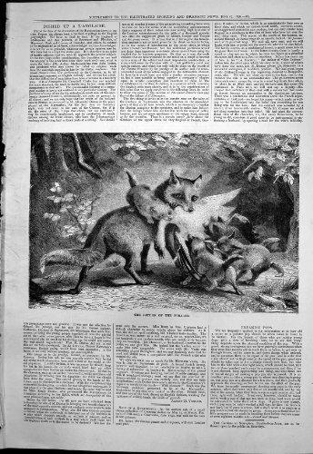 old-original-antique-victorian-print-return-forager-fox-returns-its-cubs-dead-duck-food-1876-270t118