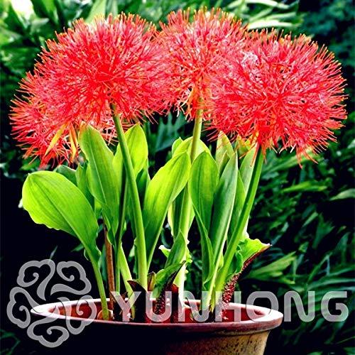 Bloom Green Co. 564-XSAF-267CV-54695