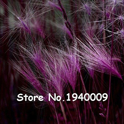 100pcs / Sac 13 couleurs mexicaine Herbe Feather Stipa magnifiques Hardy ornementales Herbe Pampas Needle Herbe Pots de fleurs Planters