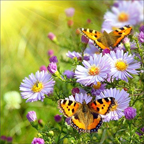 Stickersnews - Sticker boites aux lettres déco Papillons 30x30cm